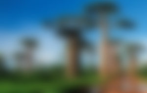 Envíos Express a Madagascar