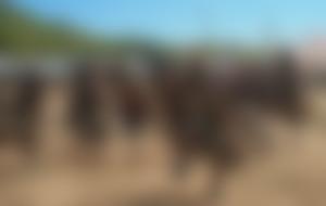 Envíos baratos a Malawi