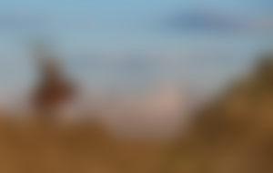 Envíos baratos a Mongolia