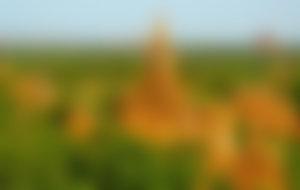 Envíos baratos a Myanmar