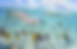 Envíos baratos a Polinesia Francesa