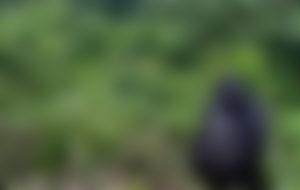 Envíos baratos a Ruanda
