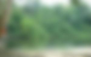 Envíos Express a Surinam
